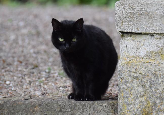 Our black cat, Pablo
